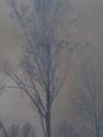 Birke Stilleben