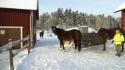 pferde_winterstimmung
