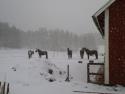 schneegestoeber_klein